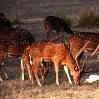 Wild Life Tour in Madhya Pradesh