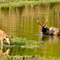 Wildlife Sanctuary Parks and Cultural Tour