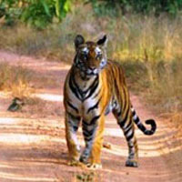 Golden Triangle + Ranthambore Tour