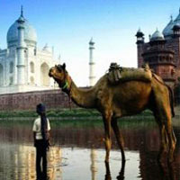 Golden Triangle + Camel Safari Tour