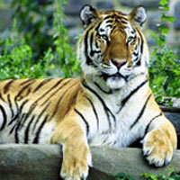 Land Of Tigers Wildlife Tour