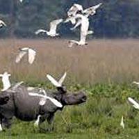 Rhinoland Tour - Assam Tour
