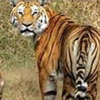 Nagpur to Pench National Park Weekend Tour