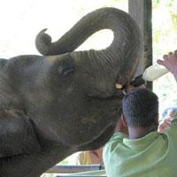 Kandy - Nuwaraeliya - Colombo Tour