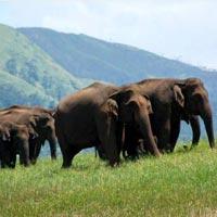 Cochin - Munnar - Thekkady - Alleppey - Kovalam - Trivandrum Tour