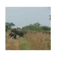 3 Days Murchison Falls National Park Wild Life Safari - Uganda Tour
