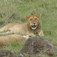 3Days/2 Nights - Masai Mara Special Package