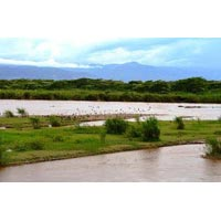 2Days/1Night Bujumbura City Tour, Rusizi National Park Tour