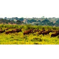 3Days/2 Nights Akagera National Park Tour & Local Co...