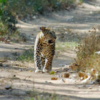 Wildlife Triangle Holiday Package