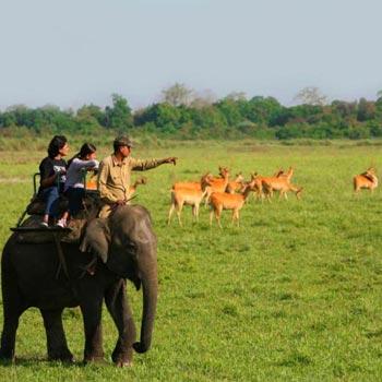 Kaziranga National Park, Manas National Park, Pabitora Wildlife Sanctuary Tour