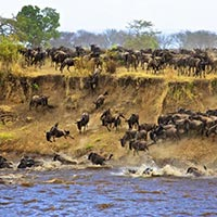 Wildbeest Migration Offer Tour