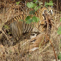 Kanha National Park Package