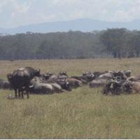 Masai Mara Air Package