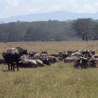 Great Maasai Mara Tour