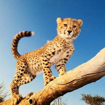 Big Cat Safari Kenya and Tanzania Tour