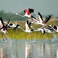 Golden Triangle tour With Bharatpur and Sariska