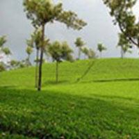 Kerala - Hills & Spices 4N/5D