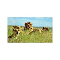 Wild Cats and Walking Adventure Tour