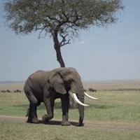 GTC4 - 6 Days Great Rift Valley Lakes & Masai Mara Camping Safari