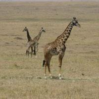 Great Rift Valley Masai Mara Camping Safari Tour