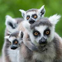 5 Days in Madagascar to See Lemurs