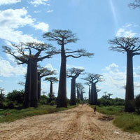 Madagascar Discovery Package