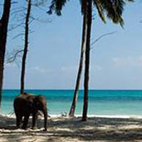 Special Honeymoon Tour in Andaman