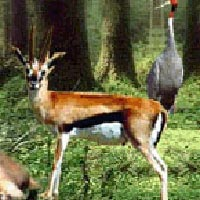 Wild life of Gujarat in 12 Nights and 13 Days Tour