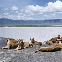 15 Days kenya and tanzania budget safari Nakuru - Naivasha - Masai Mara - Narok Tour