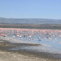 2Days Lake Nakuru Tour