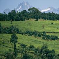 8 Days Kenya Lodge Safari Samburu-Aberdare-Lake Nakuru-Maasai Mara Tour