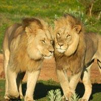 10 Days Mt.Kenya - Samburu - Aberdare - L.Nakuru - L.Naivasha And Maasai Mara Tour