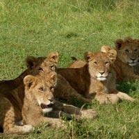 4 days Kenya Camping Safari maasai mara