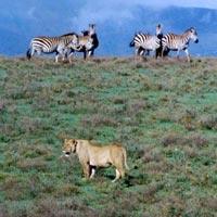 4 days Tanzania camping safari Serengeti - Ngorongoro Crater