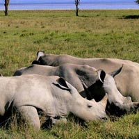 3 Days Tanzania lodge safari Ngorongoro/ Lake Manyara Lodge Safari Tour
