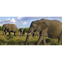 7 Days Best of Kenya Luxury Adventure Tour