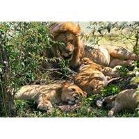 7 Days Kakamega Forest and Lake Victoria Tour