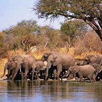 Victoria Falls And Chobe Tour
