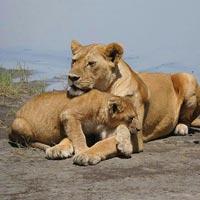 3 days 2 nights Safari Tarangire and Ngorongoro Tour