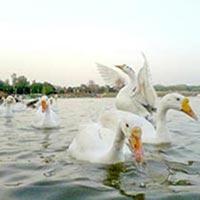 Chandigarh - Kurukshetra Tour