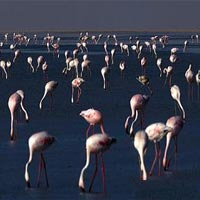 GUJARAT - Wildlife and Bird's Safari Package