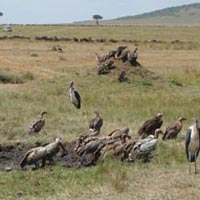 5 Days Kenya Budget Safari Tour