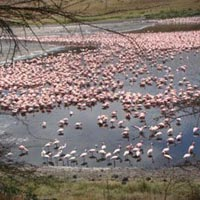 6 Days Kenya Wildlife Package