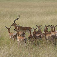 8 Days Kenya Wildlife and Nature Safari Tour