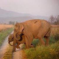 Delhi - Nainital - Jim Corbett - Kausani Tour
