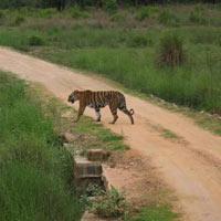 Kanha Wildlife Sanctuary Tour