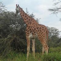 Lake Turkana Camping Safari in Kenya