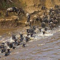 Magical Kenya - Tanzania Expedition