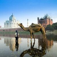 Taj Heritage Tour